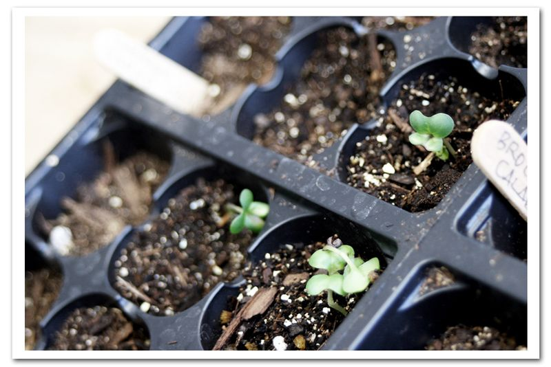 For-the-food-grow-trays