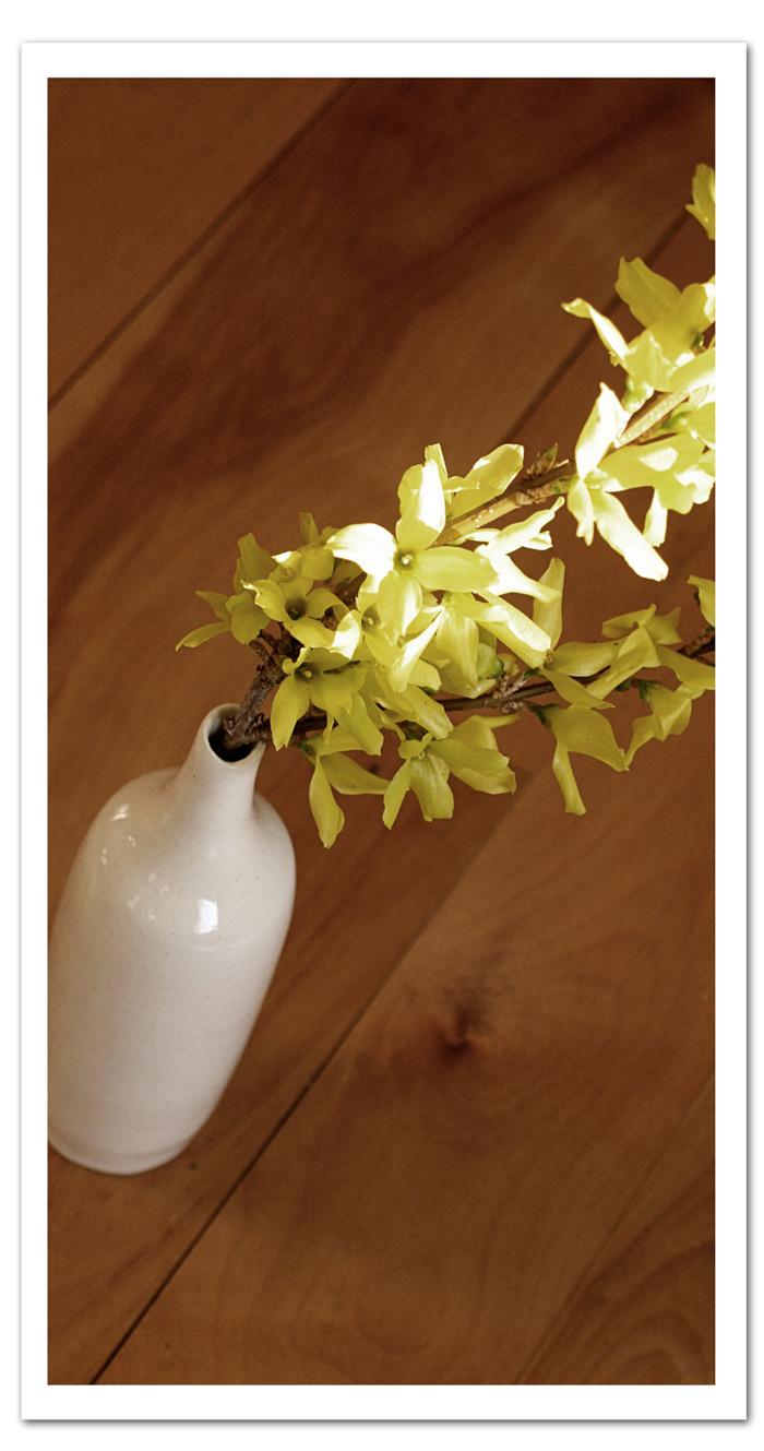 Forsythia-in-vase