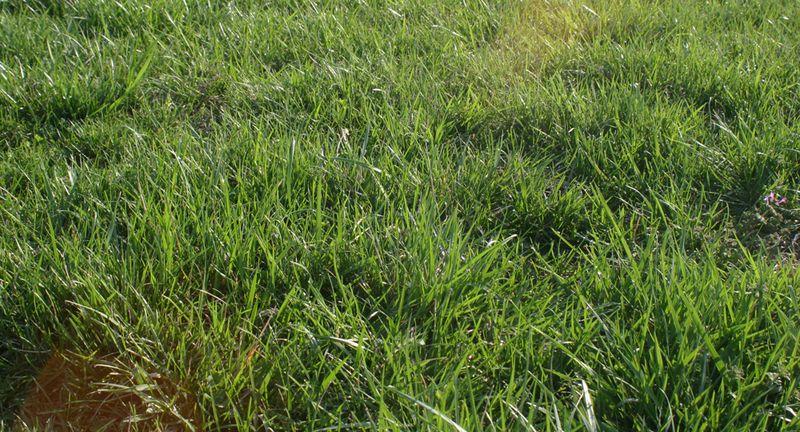 Green-green-grass
