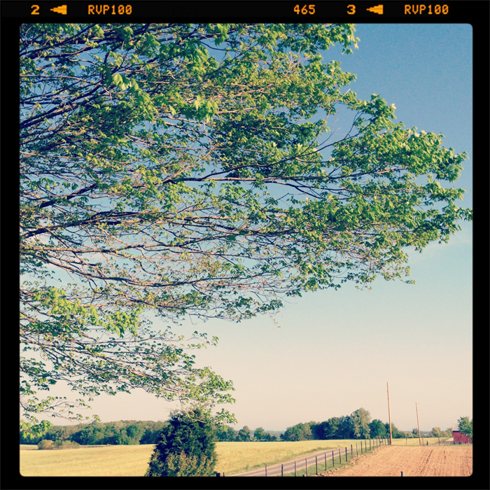 Farm-maples