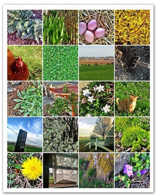 Mosaic-spring-2013-1
