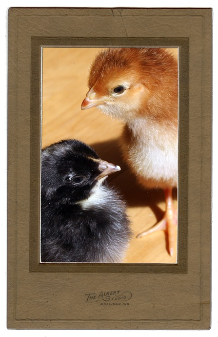 chicks to love