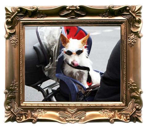 coolio doggie