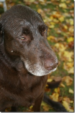 old dogs love rain
