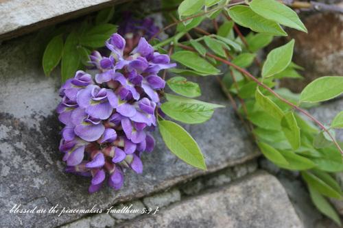 Photo_july_23