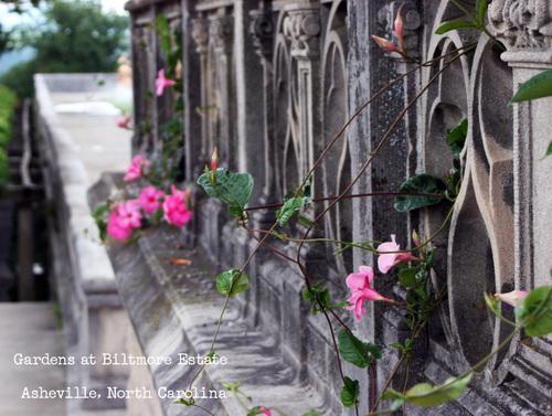 Photo_july_28_2